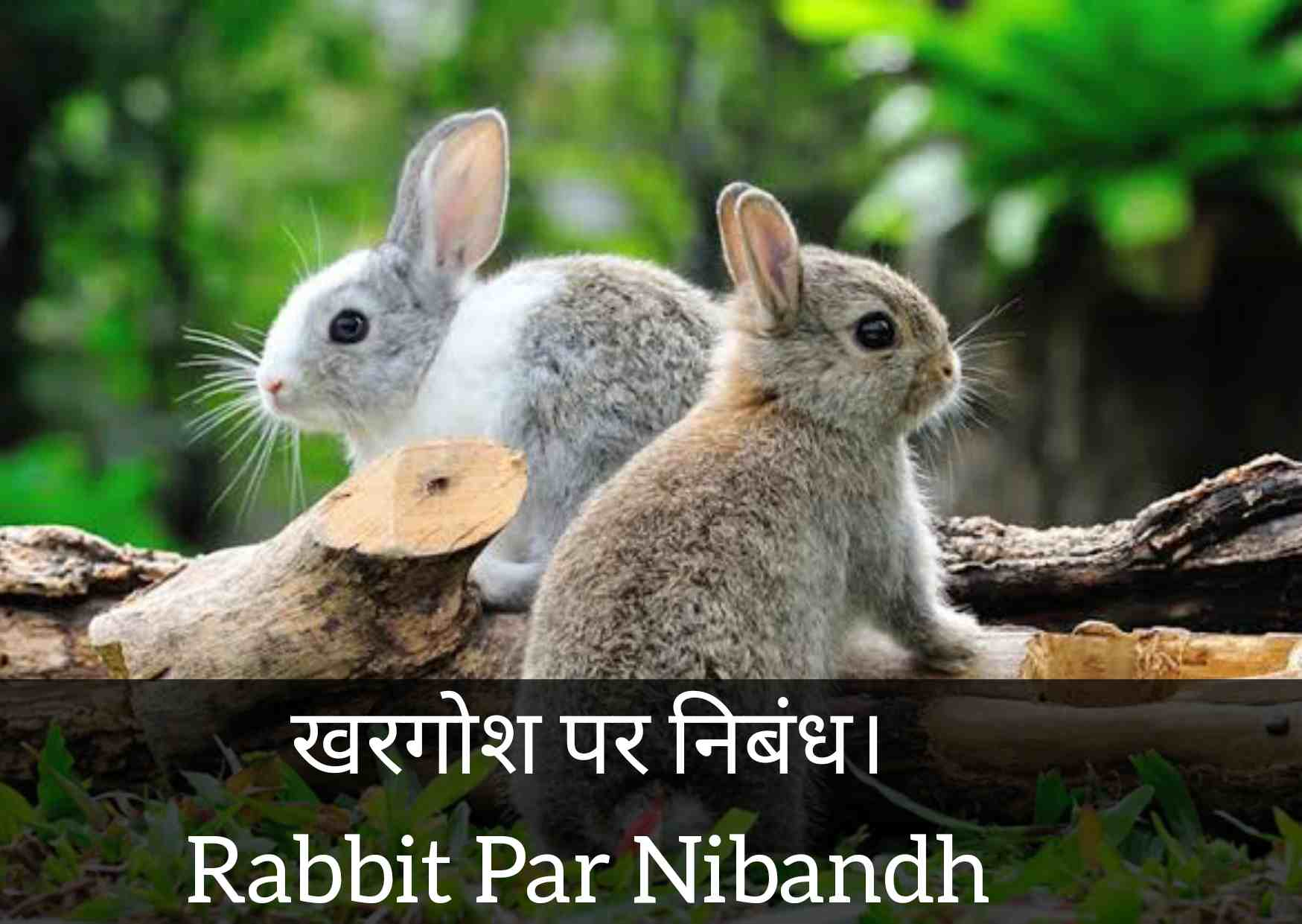 Essay About Rabbit in Hindi, Information About Rabbit in Hindi, Essay on Rabbit in Hindi