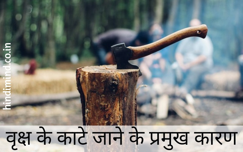 Essay on Importance of Tree in Hindi, Tree in Hindi, Importance of Tree